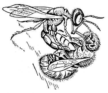 """Повні тексти """"De Libertate"""", """"Всякому місту – звичай іправа"""", """"Бджола та шершень"""""""